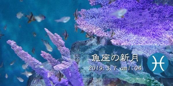 魚座新月20190307
