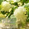 Facebookイベント双子座新月画像
