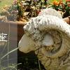 牡羊座アイキャッチ